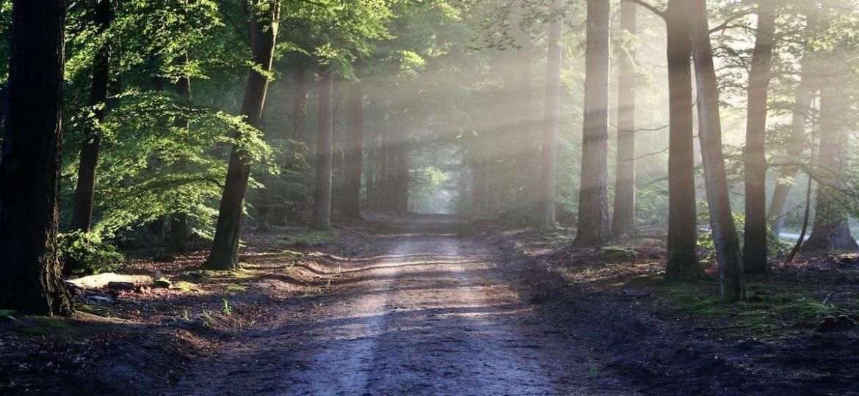 Energiewirtschaft Wald Afrika