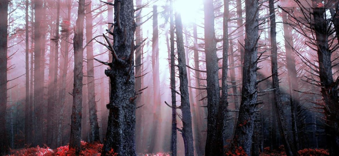 forest-4395994_1920 (1)